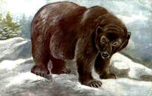 que faire si rencontre un ours